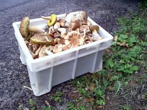 Ящик грибов