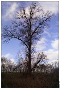 Дерево у колодца