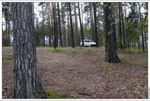 Лес в заповеднике